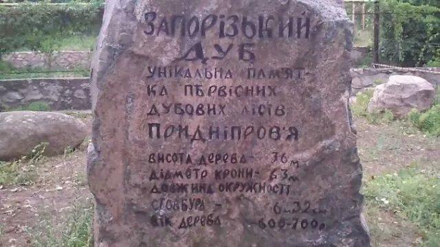 В Запорожье ищут замену знаменитому 700-летнему дубу